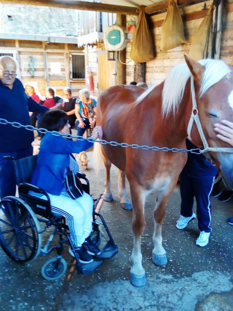 cavallo per amico succivo (3)