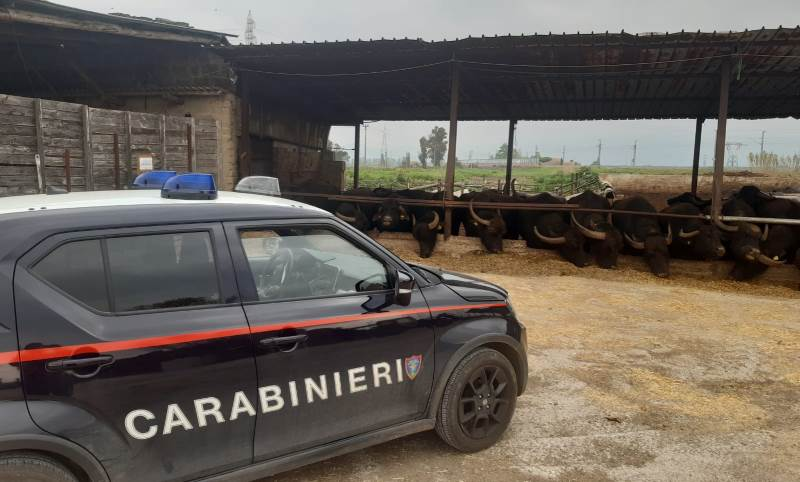 carabinieri bufale