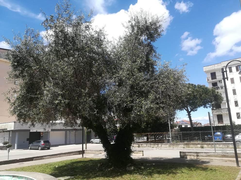 parete piazza troisi ripulita (5)