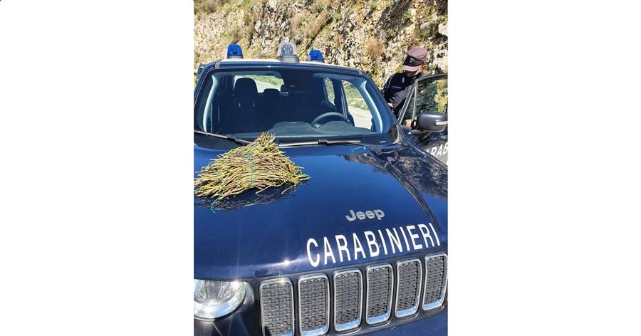 asparagi carabinieri