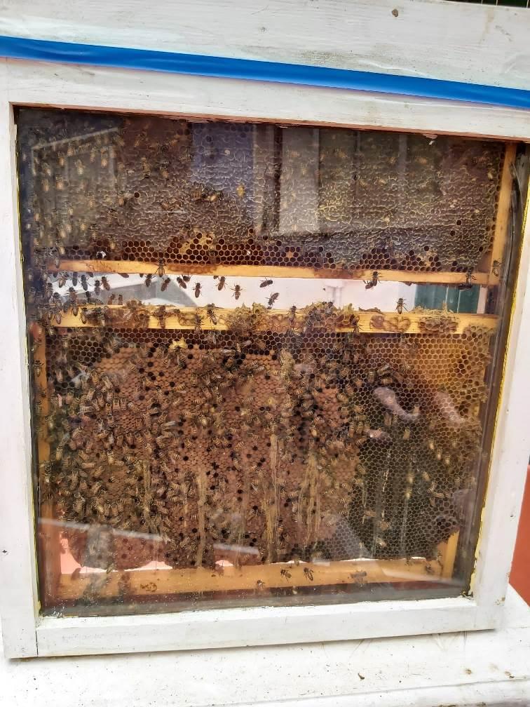 giornata api Peter Pan di Casaluce (4)