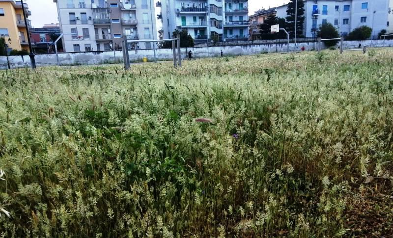 parco pozzi erba