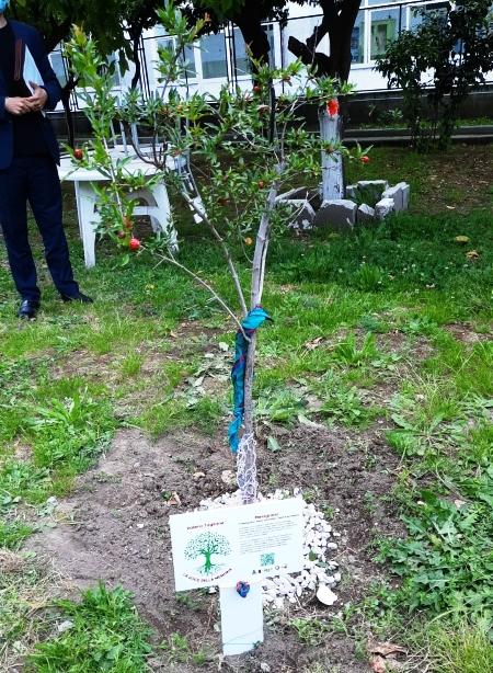 taglione giardino memoria (10)