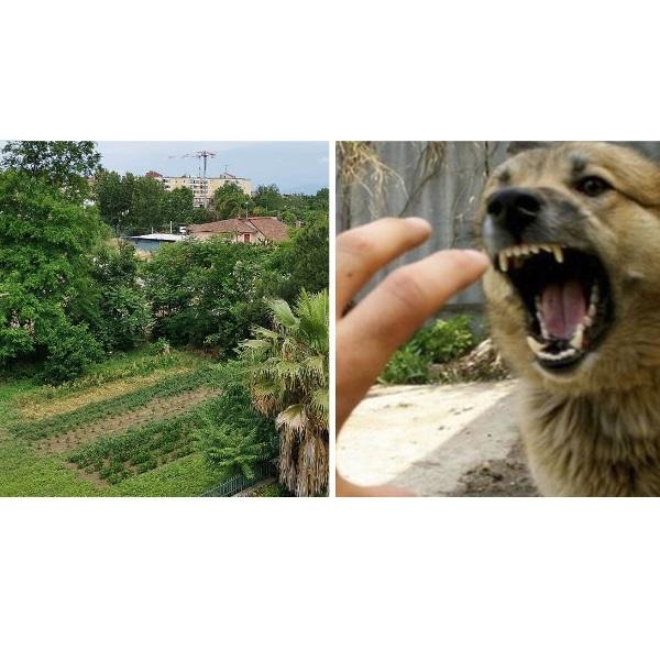 terreno aversa cani