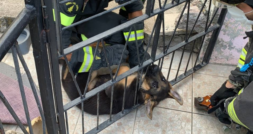 cane incastrato cancello