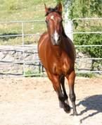 Cavallo4