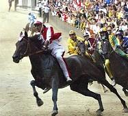 Cavallo Palio