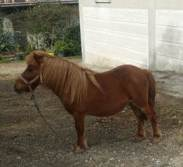 Pony Legato