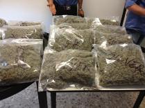 Marijuana Uste3
