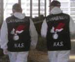 Carabinieri Nas2
