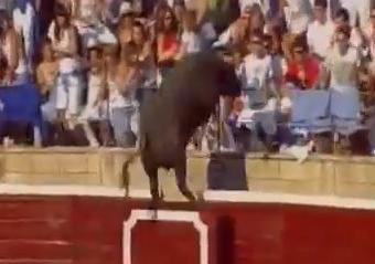 Toro Tafalla