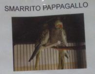 Pappagallo Smarrito
