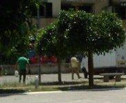 Piazza Pace Giardinieri Al Lavoro