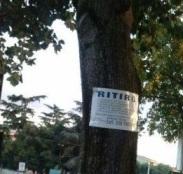 Platani Cartello Albero
