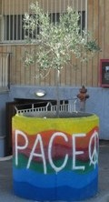 Ulivo Pace