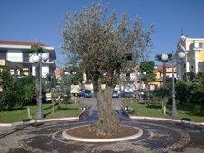 Ulivo Piazza